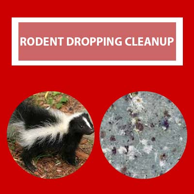 rodent dropping removal