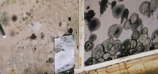 Can I Use Bleach To Remove Mold In My House