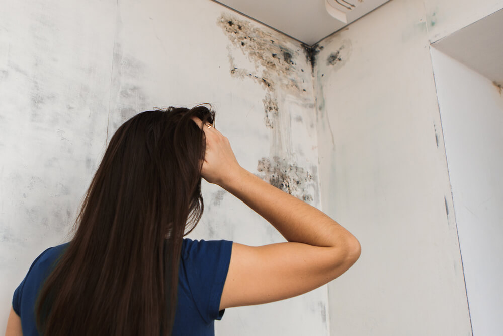 10 Signs of Mold How to Detect Mold in Your Home