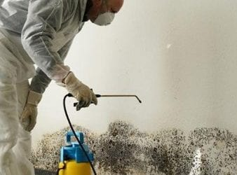 Average Cost For Mold Remediation
