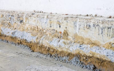 The Different Types of Mold Found in Homes (and How to Remove It!)