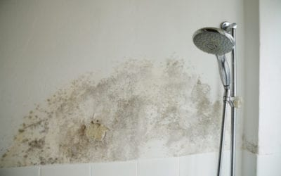 Does Homeowners Insurance Cover Mold?