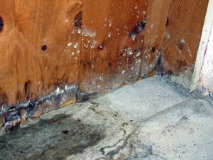 mold growth from a water leak